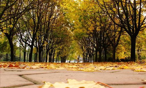 «Бархатная» осень в Одессе: чего стоит ожидать одесситам от сегодняшней погоды