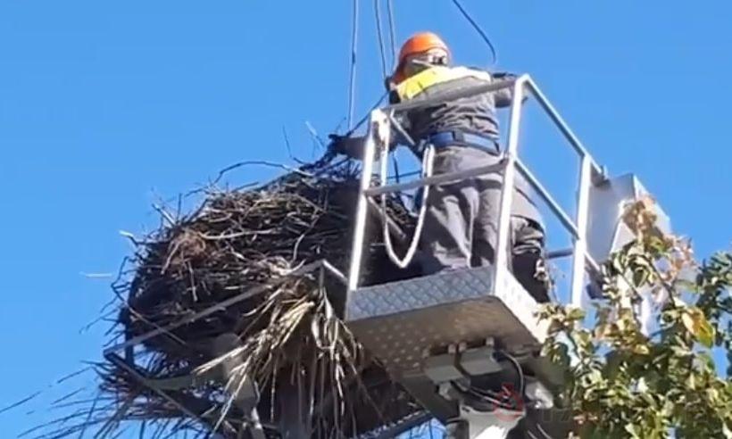 Под Одессой «приманивают счастье»: укрепляют гнезда аистов
