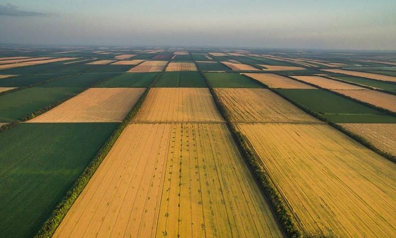 Названа средняя цена сельскохозяйственных земель: Одесская область в лидерах по цене