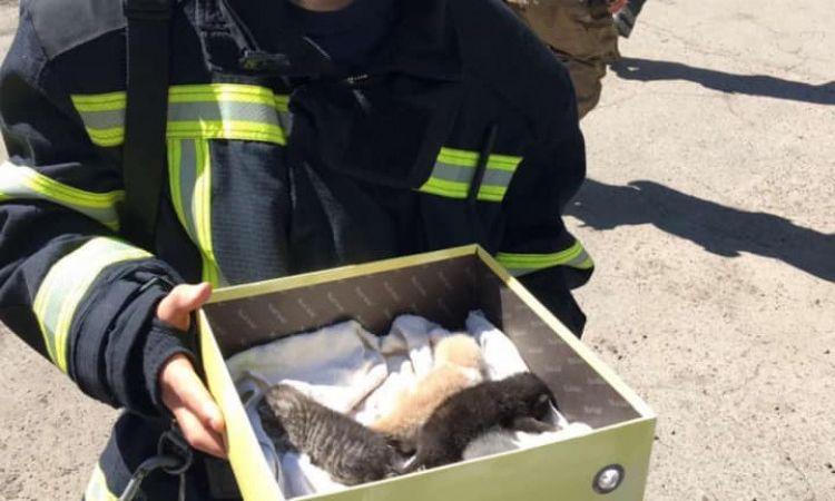 Одесские спасатели сняли маленьких котят с крыши дома