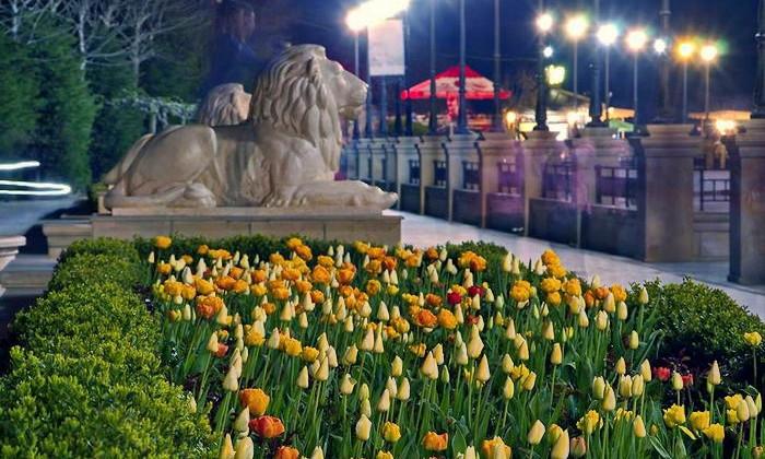 Набережная Одессы запестрела от тюльпанов