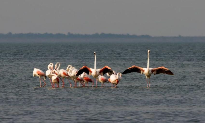 В Одесскую область прилетели розовые фламинго
