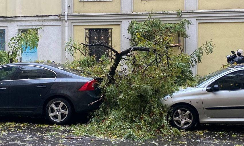 Непогода в Одессе валит деревья (видео)