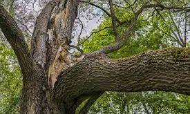 В Одессе вырубят 10% деревьев