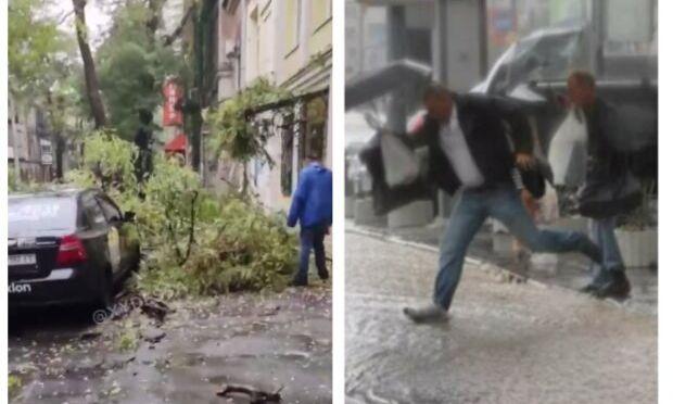 В Одессе сильный шторм: дерево упало на припаркованные автомобили