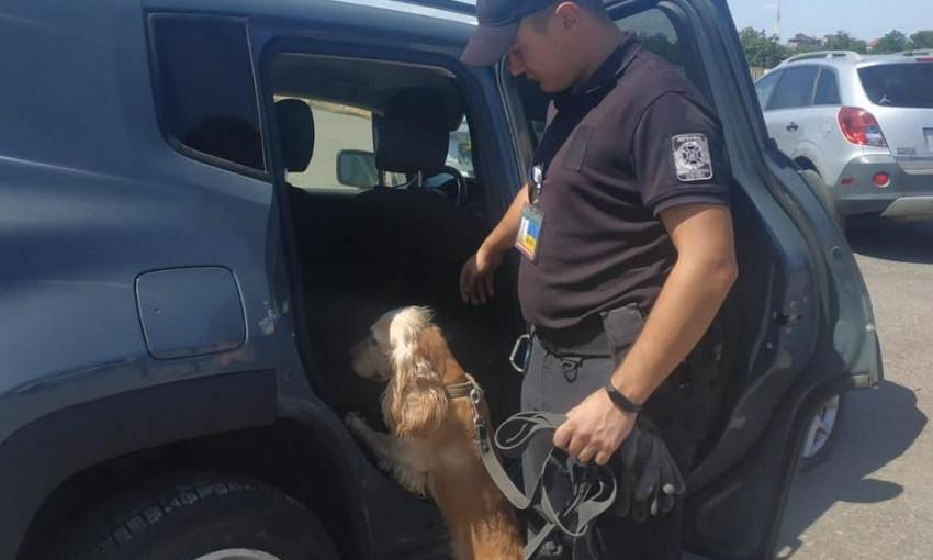 Одесские пограничники нашли контрабандные предметы в битых авто из США