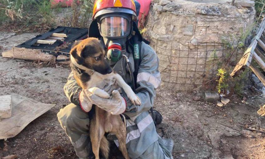 В Одесской области работники специальной службы спасли пса, который провалился в колодец
