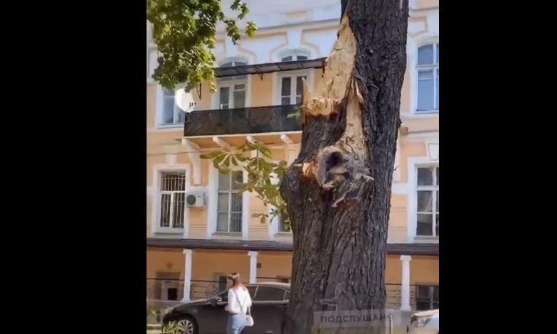 В Одессе уже падают деревья
