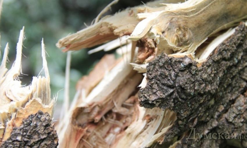 В Одессе обломок дерева упал на голову прохожему