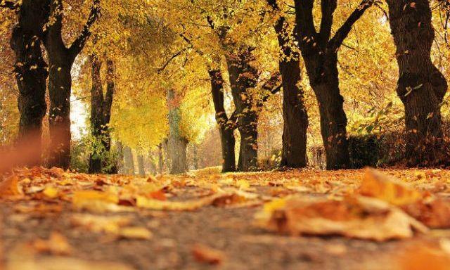 Какой будет погода четвёртого октября?