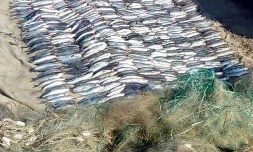 В Одесской области задержали браконьера с уловом на два миллиона гривен