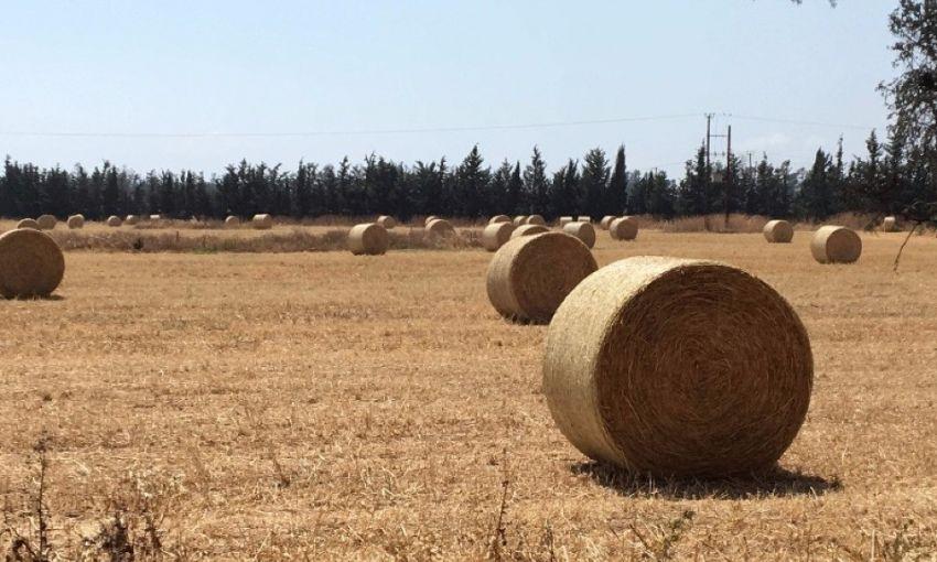 Одесский урожай зерновых оценивают в сотни миллионов долларов