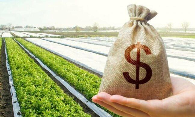 На Одесчине продали уже почти 400 гектаров земли